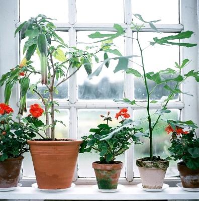 6 tipp, hogy szebb legyen a kiskerted és a balkonod!