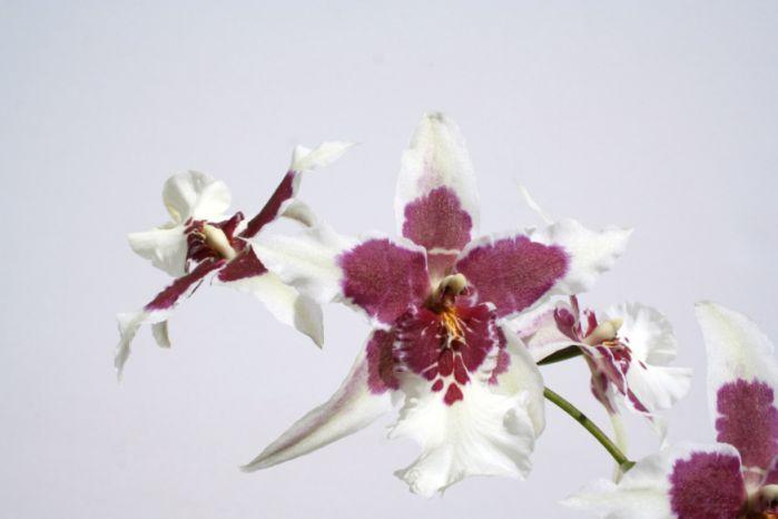 Így gondozd az orchideát!