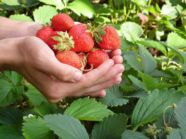 (Sz)edd magad tele: kezdődik a gyümölcsvadászat!