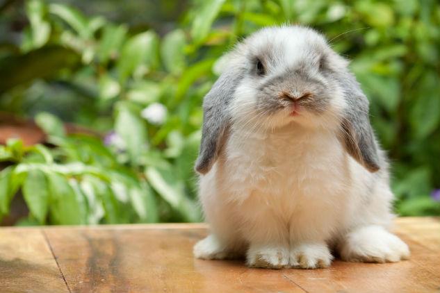 Húsvétváró állatsimogató: nyúl, tengerimalac és degu várja a kicsiket