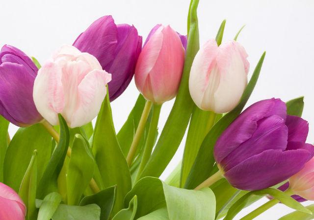 Erről árulkodnak a virágok: tippek nőnapra