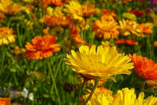 Csodás hatású házi gyógynövények: jó ha Te is tartasz otthon