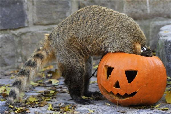 Őszi szünet és Halloween az állatkertben: igazán tökös programok