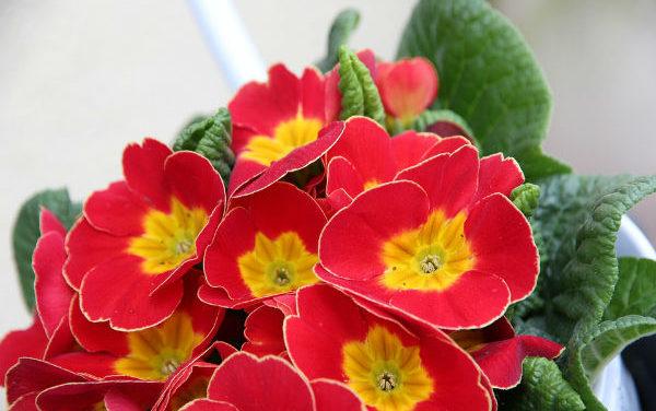 Tavaszi mérgező növények a kertedben: ezektől óvd gyermekedet!
