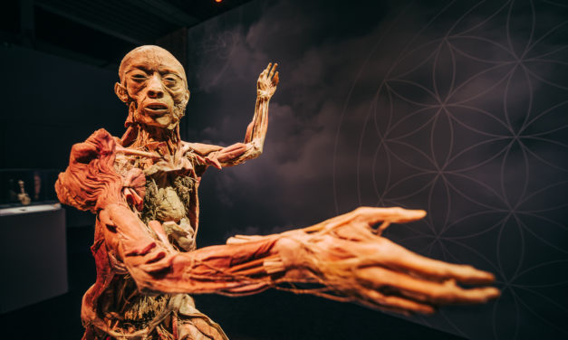 Már csak egy hónap, és Budapestre érkezik a BODY kiállítás