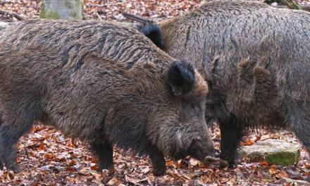 Állati jó szabadtéri programok a családnak – 4 vadaspark, ahova érdemes ellátogatni