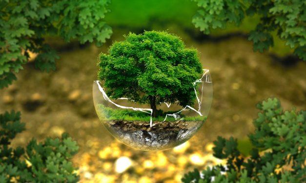 Találós kérdések növényekről, állatokról: játszva fejleszti a gyereket