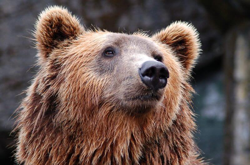Farsangot szervez a fővárosi állatkert hétvégén: mackóval kedvezményes a belépés