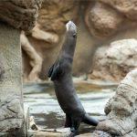 Állati jó programok az Állatkertek éjszakáján: siess, ha jegyet akarsz kapni!