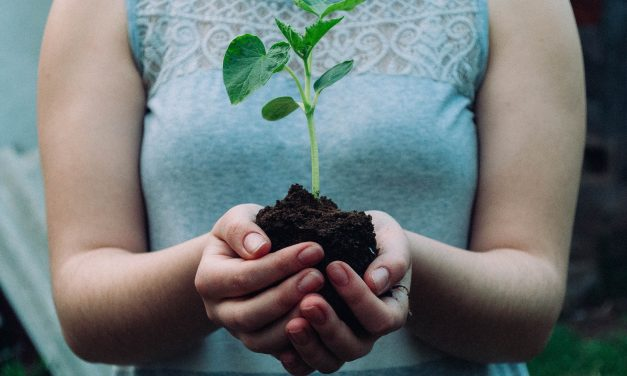 Ásó, kapa, kertészkesztyű – így állj neki a tavaszi kertészkedésnek!