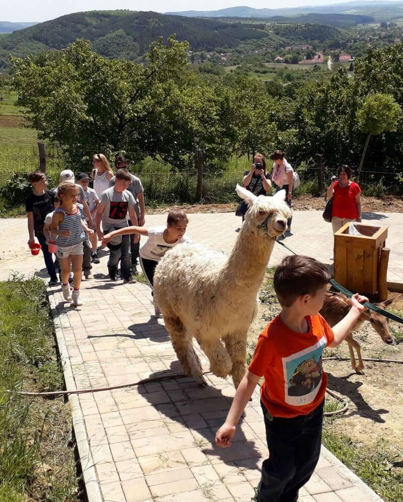 Állati jó programok, túrák, vonatozás: ezek a helyek már hétvégén is várják a családokat