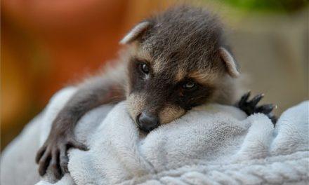 Országszerte állati jó programok ma az Állatkertek éjszakáján: íme, egy kis ízelítő