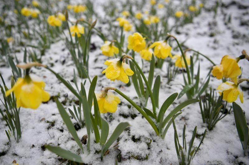 Visszatért a tél Magyarországra: mutatjuk a márciusi havazást