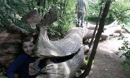 A Kamaraerdő minden évszakban gyönyörű: tanösvény, játszótér is csábítja a családokat