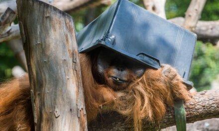 154 éves a Fővárosi Állat- és Növénykert: bébibumm és éjszakai séta