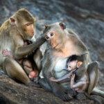 Versek, dalok, mesék, foglalkoztatók az Állatok világnapjára