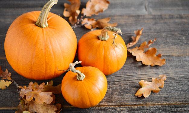 Ez a különbség a halloweeni és a sütőtök között: előbbi mérgező is lehet