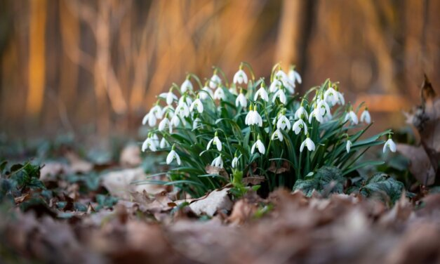 A legaranyosabb versek a hóvirágról: tavaszcsalogató költemények gyerekeknek