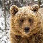 A Szegedi Vadasparkban előbújtak a medvék: Mici és Ursula nem ijedtek meg az árnyékuktól