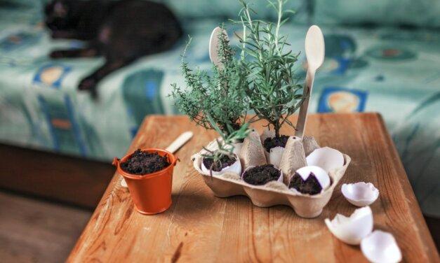 Így ültess virágot, magokat a tojáshéjba: tavaszcsalogató kreatív ötlet