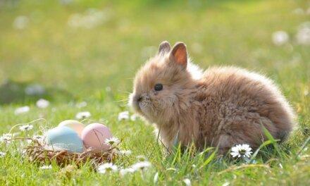 Móra Ferenc: A húsvéti tojások – Az egyik kedvenc húsvéti mesénk