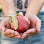 8 tipp a környezettudatos neveléshez